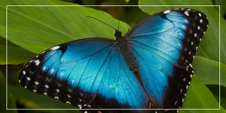 Other Local Attractions The Straffan Butterfly Farm