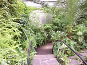 View from the bridge in the Tropical House